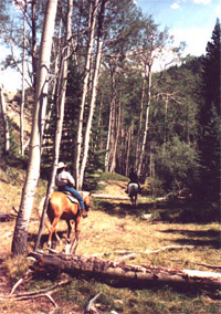Trail-ride deep into the heart of Bighorn Mountain Country in northcentral Wyoming !